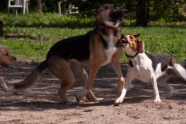 Floyd at Dog Park