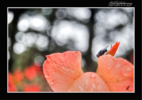 pink flower nature insect bokeh lars tribute coryaquino timetorest bokehlicious