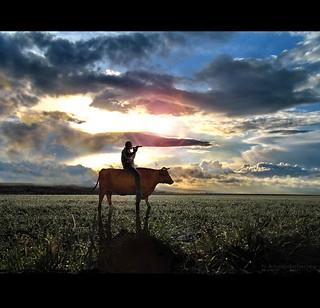 Riding the Cow  - V