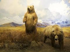 brown bear(0.0), animal(1.0), polar bear(1.0), mammal(1.0), grizzly bear(1.0), fauna(1.0), bear(1.0), savanna(1.0), wildlife(1.0),