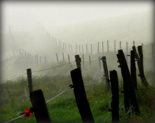 morgens im Nebel - way of life