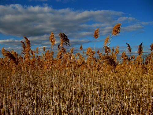 sky clouds ciel cielo nubes phragmite nuages sanctuary tallgrass audubonsociety birdsanctuary audubonsocietyofrhodeisland