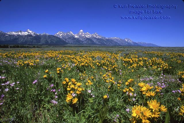 Summer, Grand Teton National Park 20 | Flickr - Photo Sharing! Zz
