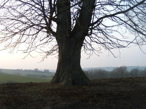 Tree, Winchelsea