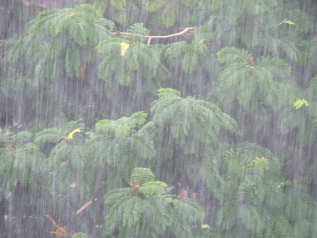 my favourite season monsoon In this article i will explain the nuances of the rainy season properties in costa rica blog the rainy season our favorite time of the year march 29 and without question, the rainy season is my favorite time of the year this comes as a surprise to many people.