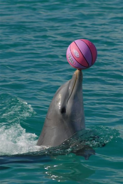 images of dolphins playing - photo #24