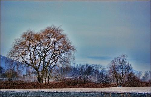 canada tree landscape britishcolumbia hdr agassiz bluemood arianwen flickrsbest sonyalpha350
