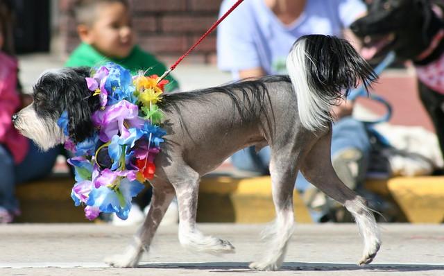 Deland Dog Show