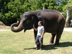 cattle-like mammal(0.0), adventure(0.0), water buffalo(0.0), zoo(0.0), grazing(0.0), safari(0.0), animal(1.0), indian elephant(1.0), elephant(1.0), elephants and mammoths(1.0), african elephant(1.0), fauna(1.0), mahout(1.0), wildlife(1.0),