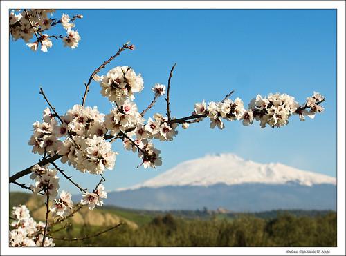 flower geotagged bokeh sicily fiore etna sicilia etneo mandorloinfiore theunforgettablepictures olympuse510 rapis60 andrearapisarda geo:lat=3755982 geo:lon=14937286