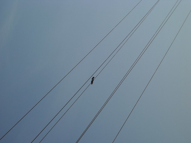 Birds on an electric line