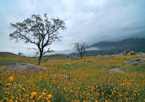 california landscape nikon arvin d300 naturesfinest tokinaatx124prodx nikond300 shotwithstevemendenhall desertempirefair2009