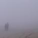 Small photo of Niebla