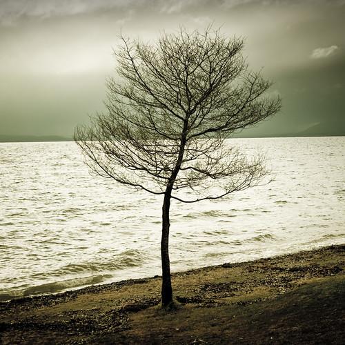 Tree / Lake / Water