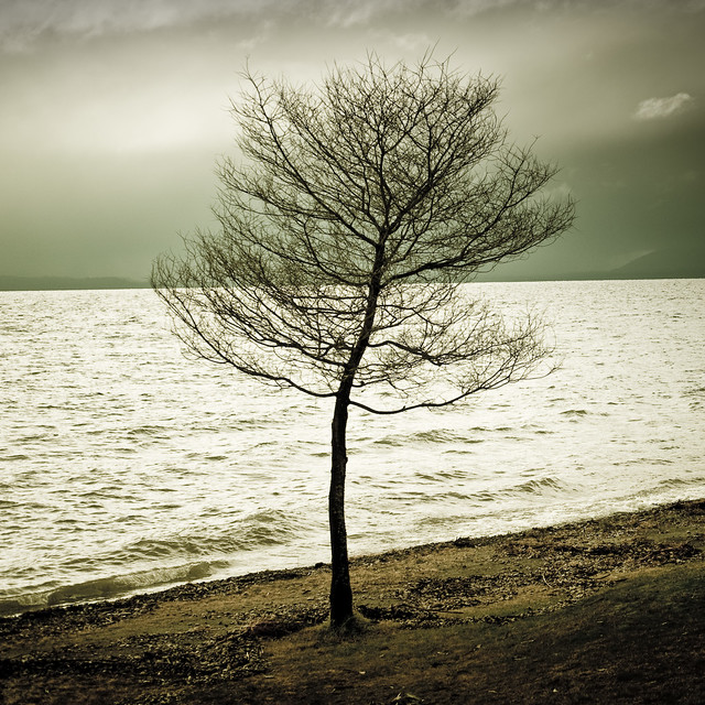 Tree / Lake / Water