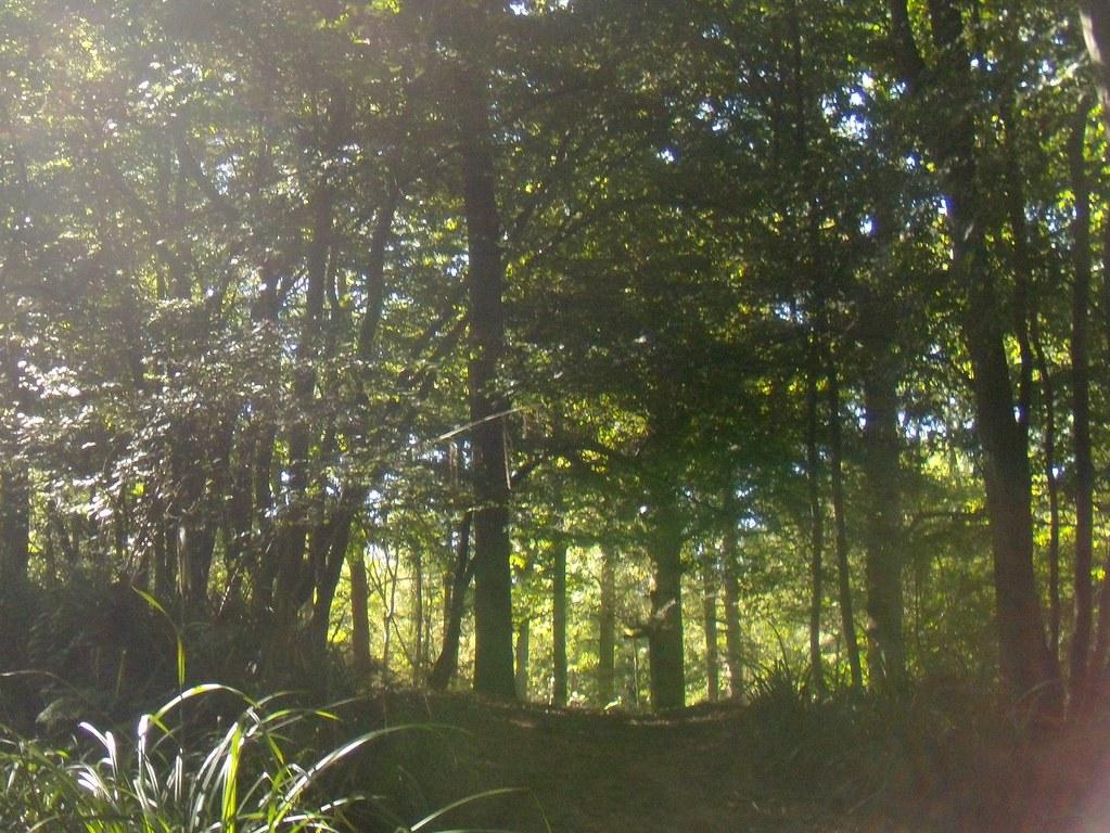 woodland Ockley to Warnham