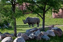 Toronto Zoo-rhino