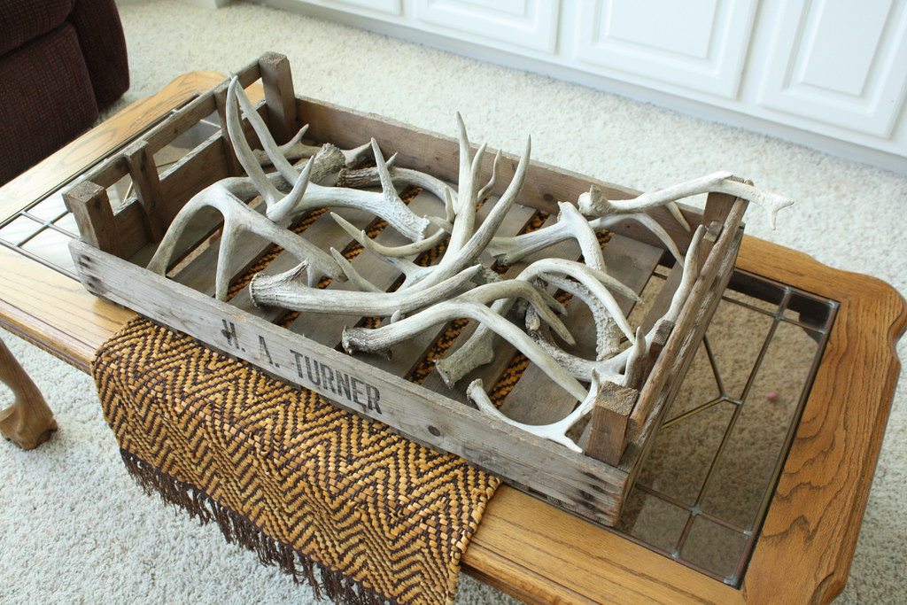 Shed Antler Display