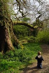 Big tree / little boy