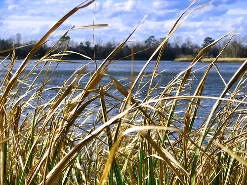 sky grass canon river powershot s5is