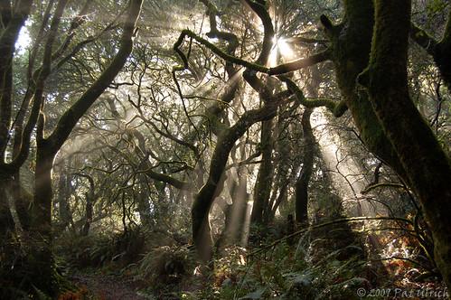 california d50 nikond50 marincounty tomalesbaystatepark specland forestscene anawesomeshot ©patulrich foreststnc09 raysinthefog