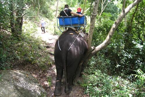 Koh samui Elephant trekking @ Namuang1 ナムアンの滝象トレッキング0003