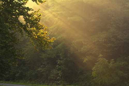 trees fog sunrise nc northcarolina sunbeams lincolncounty godslight davidhopkinsphotography ncpedia