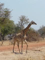 Zambia03SouthLuanga140