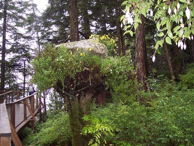 Glacier Gardens Rainforest Adventures Flickr Photo