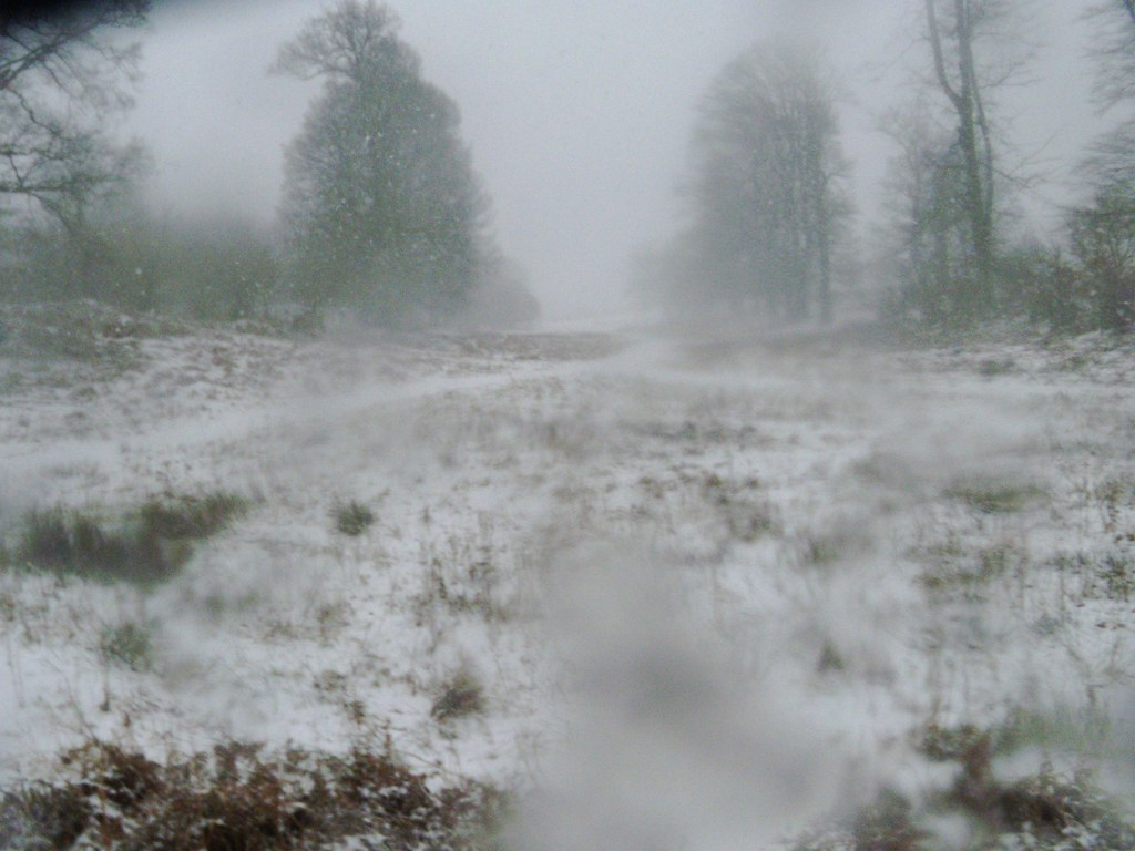 Knole park - whiteout The blizzard was spectacular but the snowflakes kept landing on the lens. Leigh to Sevenoaks