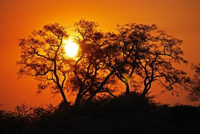 Puesta de sol en el Delta del Okavango, Botsuana
