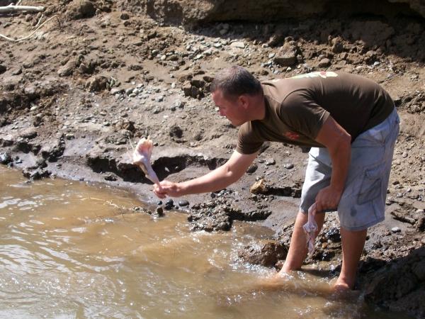 American Crocodile Viewing Tour in Tarcoles River, Costa Rica