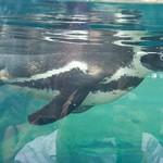 Woodland Park Zoo Seattle 063