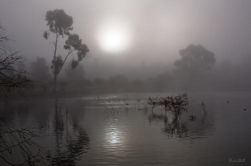 california morning fog sunrise photography still nikon peace image sandiego stock dream foggy peaceful tranquility explore zen meditation spirituality spiritual tranquil dagobah dx lakemurray missiontrailsregionalpark d90 dailyrayofhope nickchill
