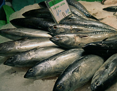 animal, mackerel, fish, fish, sauries, forage fish, food, sardine,
