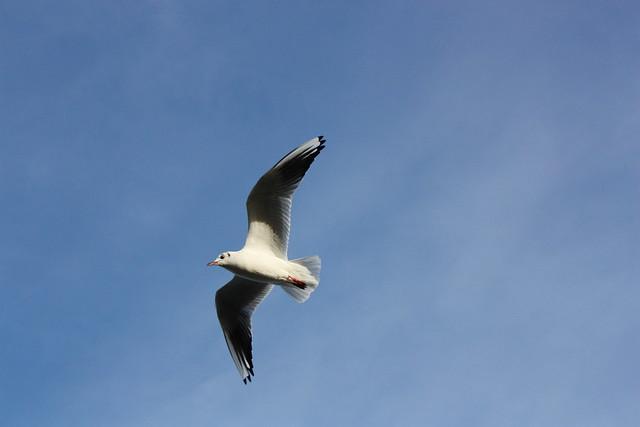 freedom bird | Flickr - Photo Sharing!