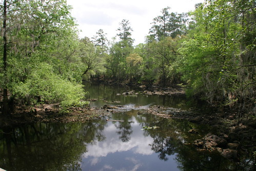 olenostatepark florida santaferiver floridaparkservice landscape water stream watercourse plant tree creek