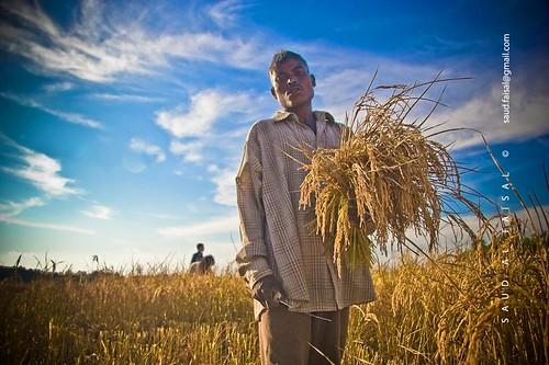 Farmer with his Proud...[Sylhet, Bangladesh]