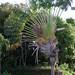 Small photo of Flat palm tree
