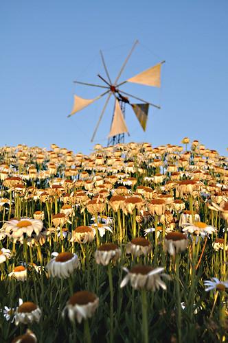 trip verde landscape holidays mediterraneo tramonto estate natura creta grecia cielo sole azzurro colori paesaggio mulino isola margherite visione escursione muliniavento mulinoavento nikond90