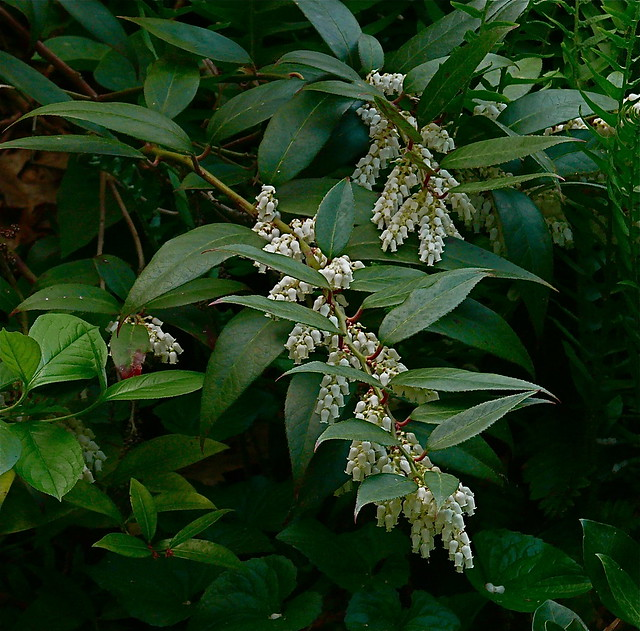 Va Native Plant Society: Virginia Native Plant Society, Blue Ridge