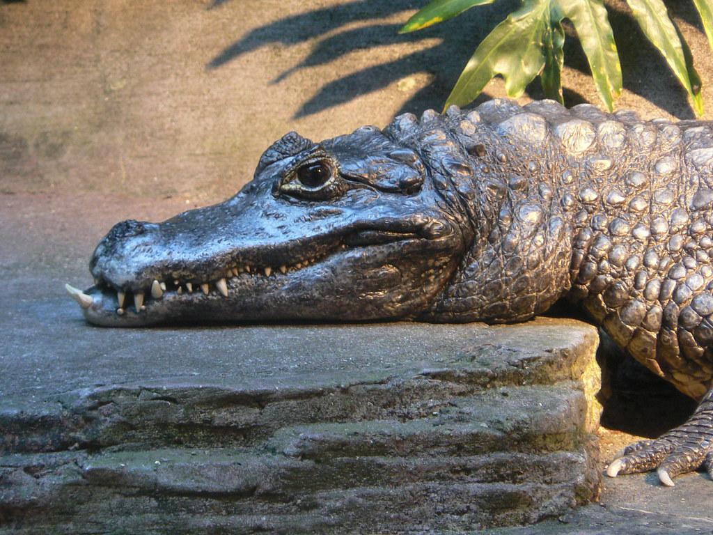 Gator wins malpractice suit against orthodontist