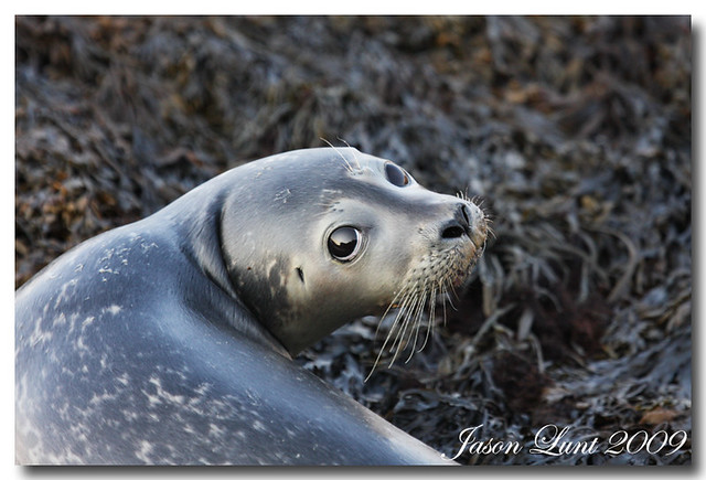1482 Baby Harbor Seal | Flickr - Photo Sharing!