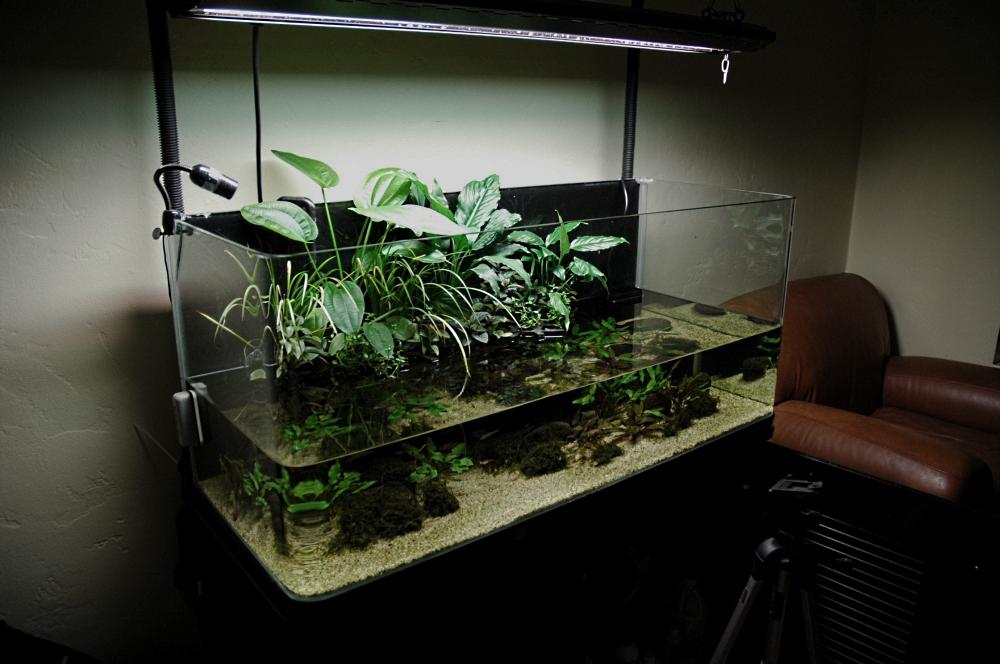 New Fish Tanganyika Shoreline 50g Riparium The