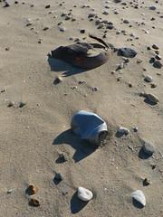 used shells