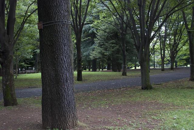 府中の森公園_20090717_02