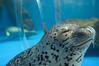 Photo:20090812 Notojima Aquarium 10 (Blissing time) By BONGURI