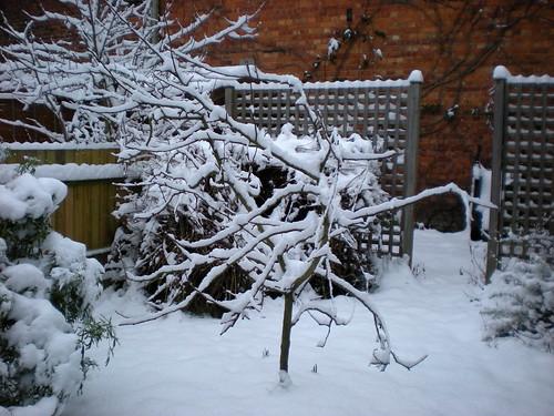 Snow Day Garden #2