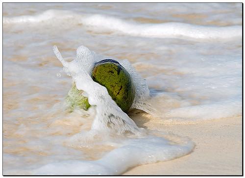 sea vacation sun holiday beach strand geotagged island meer coconut urlaub sunny barbados caribbean sonnig sonne atlanticocean kokosnuss atlantik burningrubber karibik madeittoexplore canoneos400d geo:lat=1307698219114932 geo:lon=5960736281674243