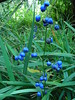 Now that's what I call blue berries. by tiexano